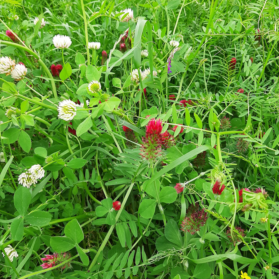 wildflower crop cover